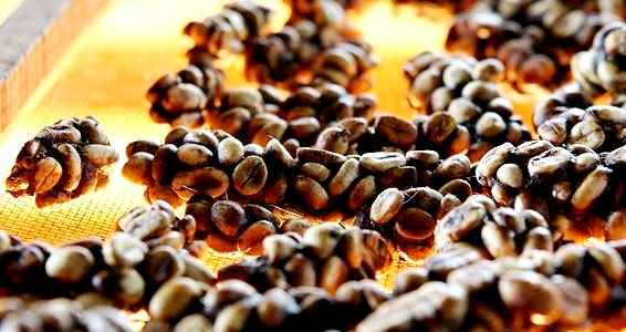 Kopi Luwak Coffee is a luxury food item or delicacy you must try