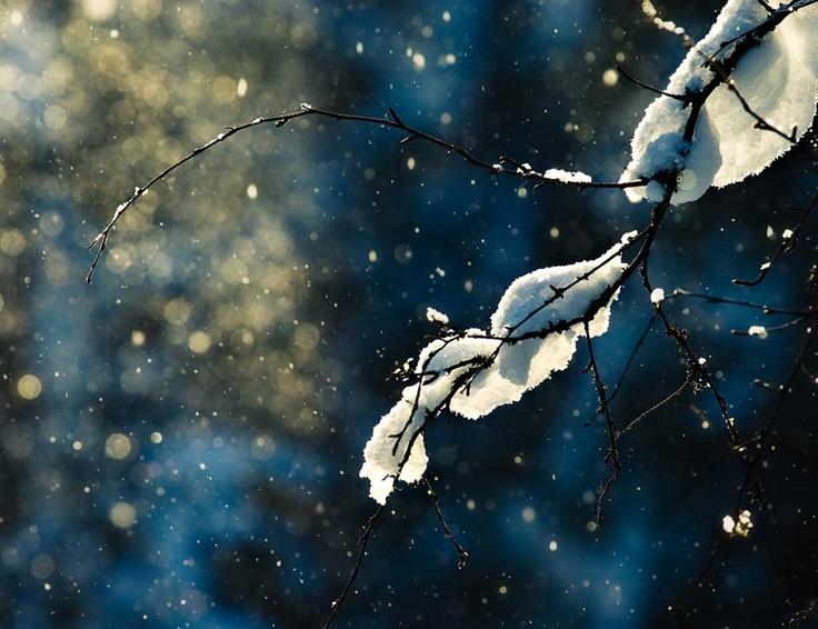 The Winter FairyTale