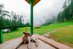 Top Pet Friendly Holiday Destinations in India