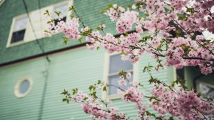 Simple Renovation Tips for Spring