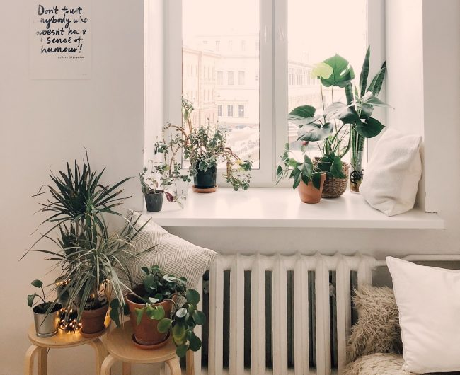 plants and greenery for living room interiors