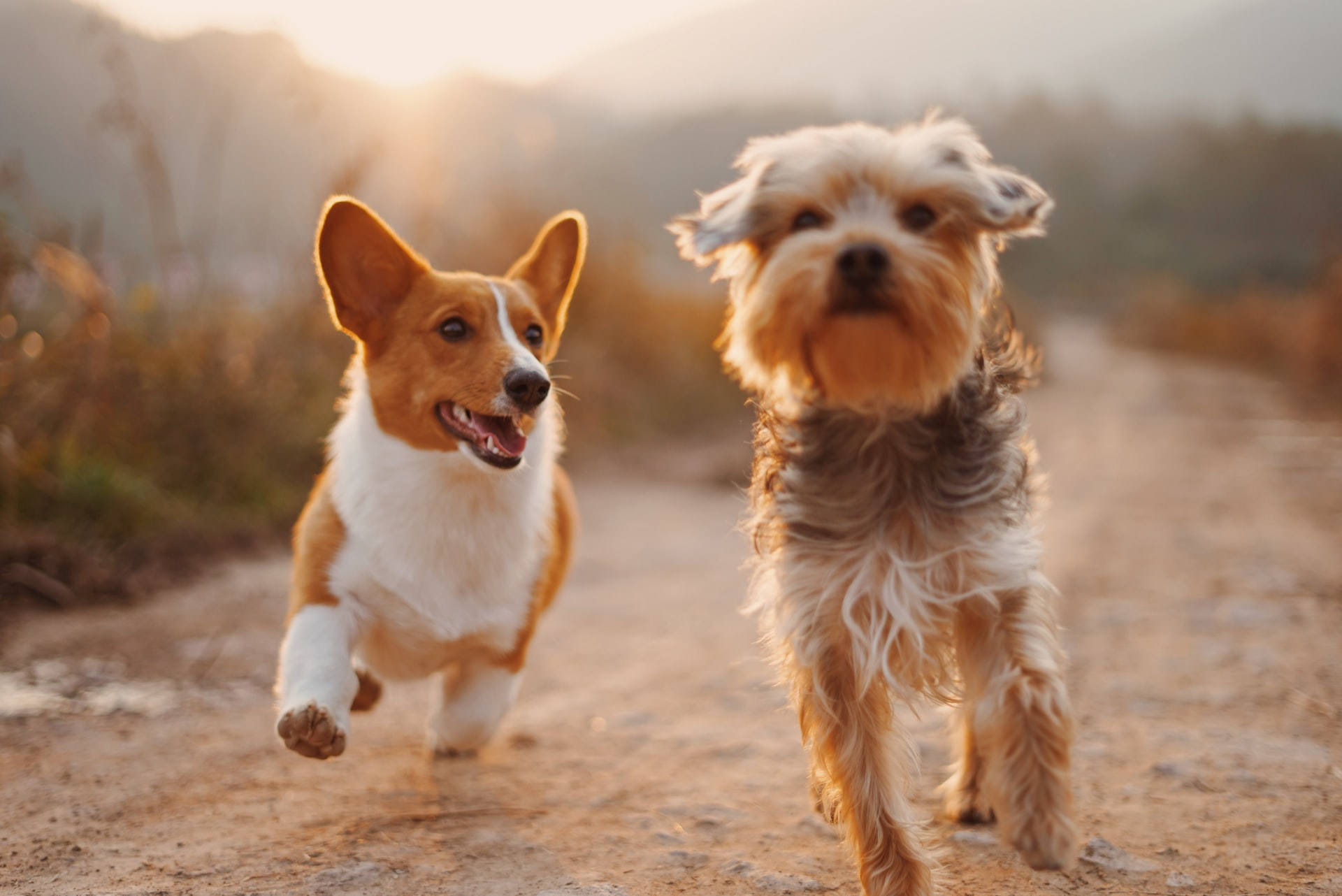 You May Need To Consider Glucosamine for Dogs