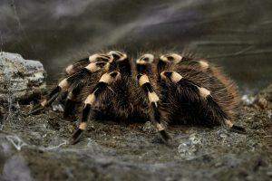 5 Things to Remember When Petting A Tarantula