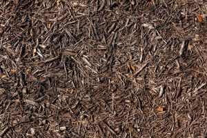 Choosing the Best Mulch for your Trees